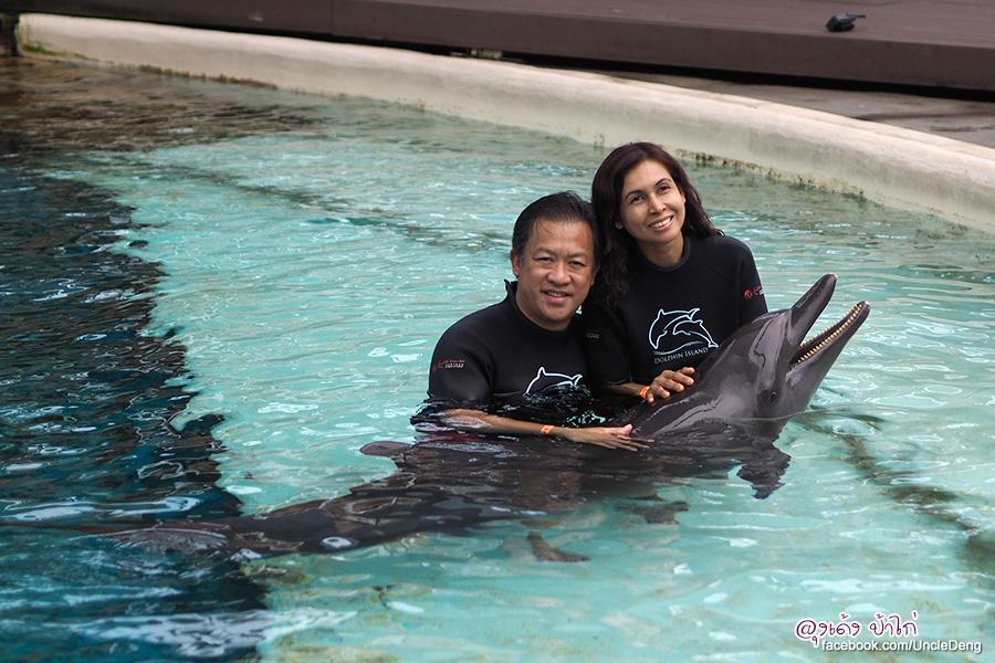 ว่ายน้ำ กับ โลมา ที่ Dolphin Island