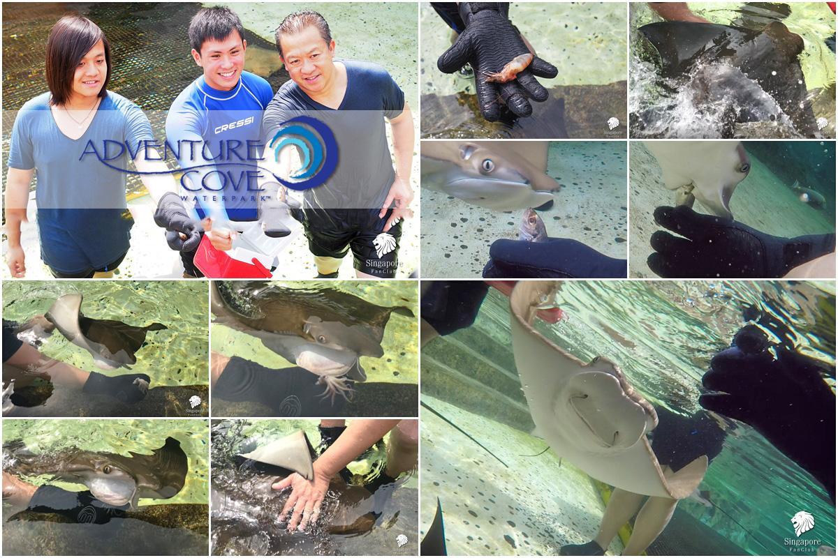 Ray Bay Adventure Cove Waterpark